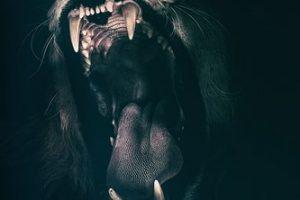 lupo paura